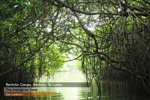 Сафари по реке Бентота Ганга, Шри Ланка